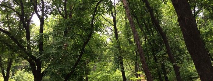 Namsan Park is one of Locais curtidos por Seung-Hwan.