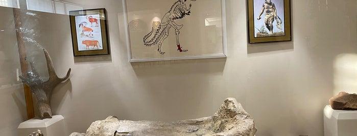 Kars Arkeoloji Müzesi is one of Archaeology Museums of Turkey.