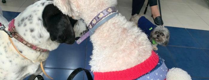 Hospital Veterinario OFTALVET is one of perros.
