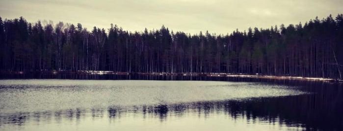 озеро Лебяжье is one of Lieux qui ont plu à scorn.