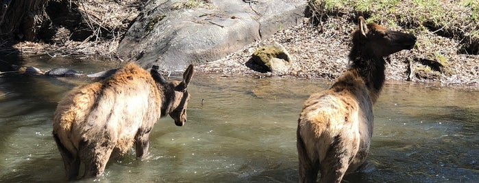 Evergreen Dam is one of Locais curtidos por Dominic.