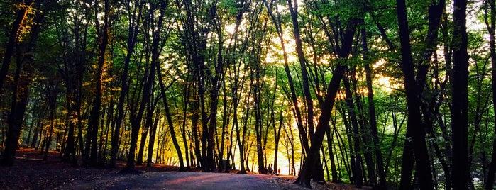 Голосіївський ліс is one of Posti che sono piaciuti a Anna.