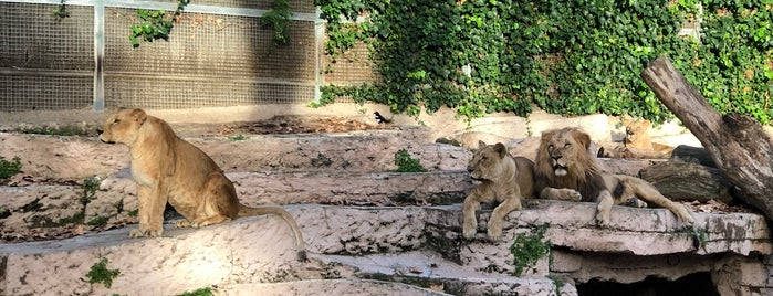 En el Zoo is one of Locais curtidos por Helena.
