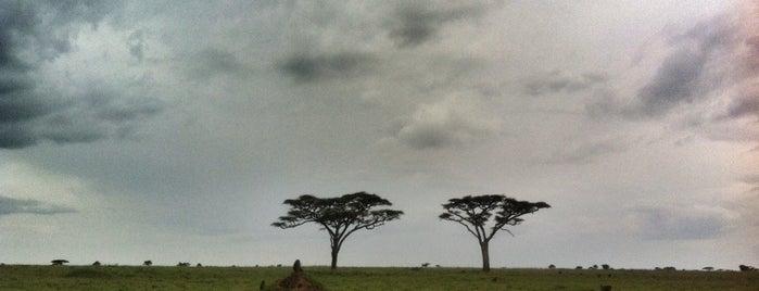 Serengeti National Park is one of Tempat yang Disukai Chris.