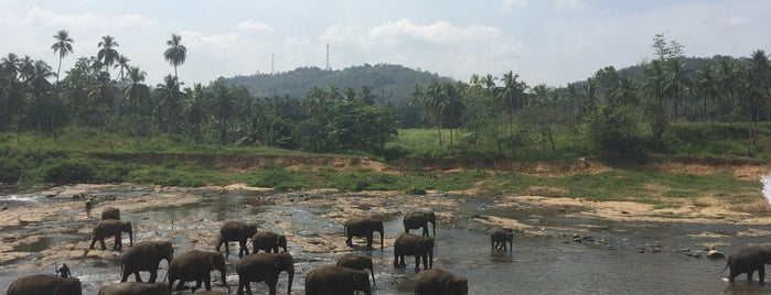 Elephants' Bath is one of Galip Koray 님이 저장한 장소.
