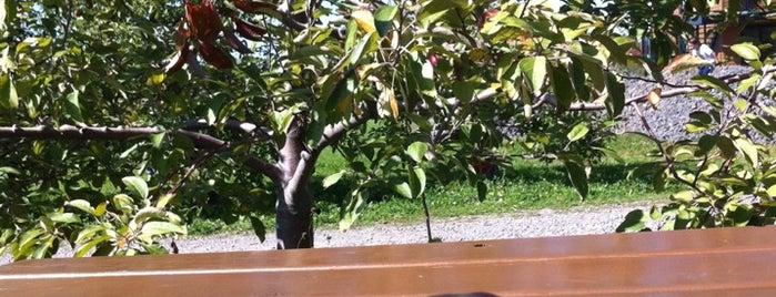 Pomme Atout Inc is one of Lieux qui ont plu à Julien.