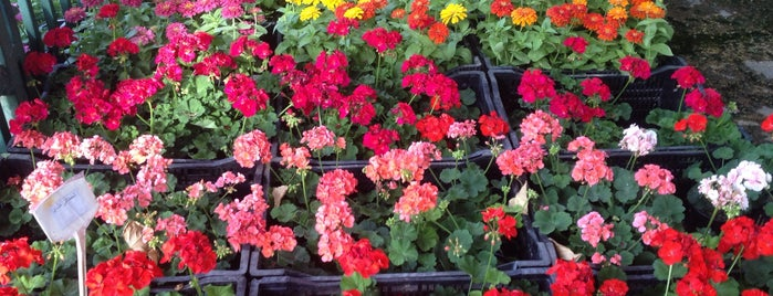 Jahan-e Kudak Flowershop | گل فروشى جهان كودك is one of สถานที่ที่ Soheil ถูกใจ.