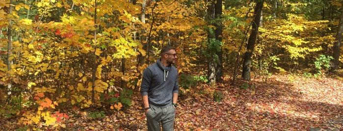 Adirondack Park is one of สถานที่ที่บันทึกไว้ของ Nicholas.