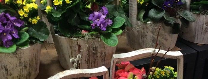 Wegmans Floral is one of Locais curtidos por Christina.