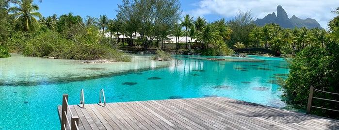 Bora Bora Lagoonarium is one of Asia & Oceania.