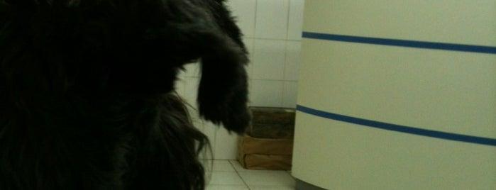 Dog Nostic is one of Gespeicherte Orte von Fernanda.