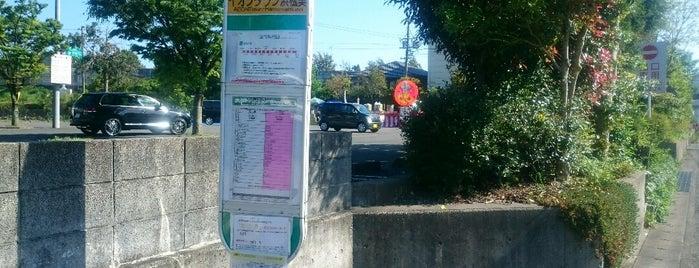 イオンタウン浜松葵 バス停 is one of 遠鉄バス  51|泉高丘線.