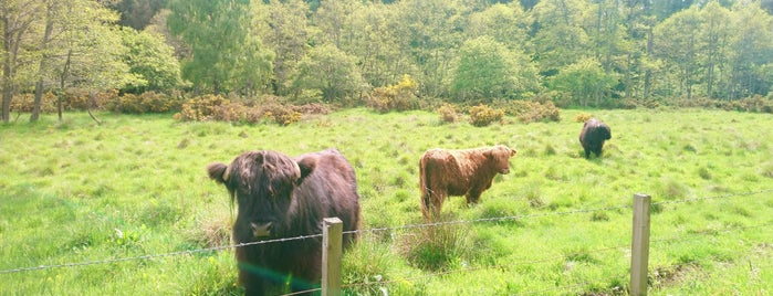 Glen Tanar is one of Scotland Other.