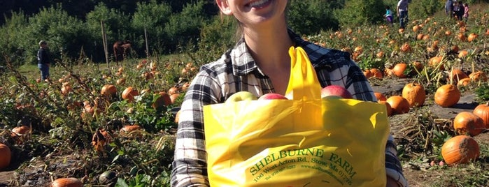 Shelburne Farm is one of Excellent Farms for Apple Picking.