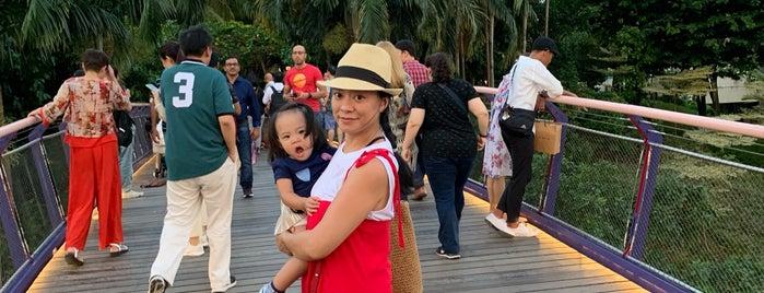 Dragonfly Boardwalk is one of Singapur.