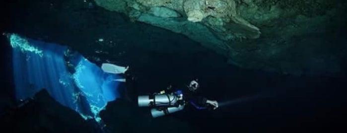 Dive Guru (training center) is one of Lugares favoritos de Leela.