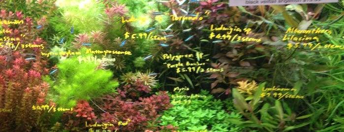 Aqua Forest Aquarium is one of Auntie Lauren.