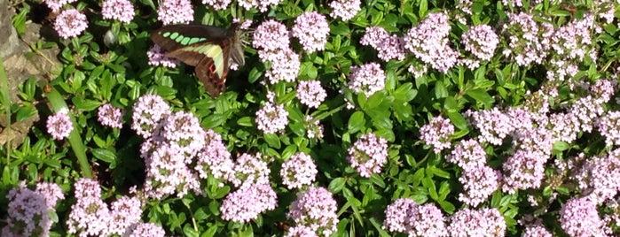 Nunobiki Herb Garden Park is one of สถานที่ที่ Joyce ถูกใจ.