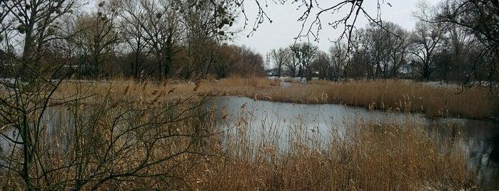 Mühlwasser is one of das schwimmwasser.