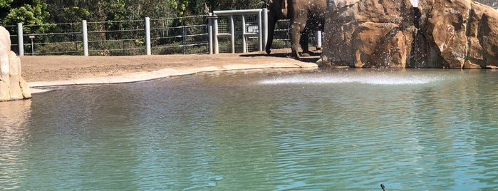 Lion and Jaguar Habitat is one of Orte, die Victor gefallen.