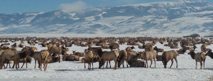 National Elk Refuge is one of Sara 님이 좋아한 장소.