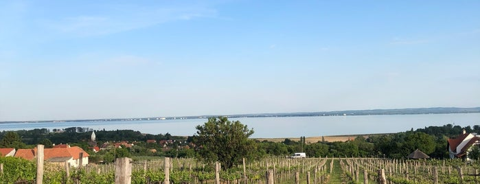 Homola Borterasz is one of Balaton.