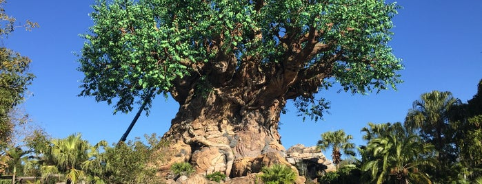 Disney's Animal Kingdom is one of Tempat yang Disukai Alan.