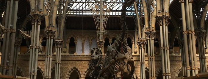 Oxford University Museum of Natural History is one of Orte, die Alan gefallen.