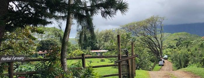 Kauai Farmacy is one of Hawaii Faves.