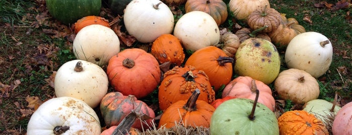 Paulsons Pumpkin Patch is one of Kent Harvest Trails.