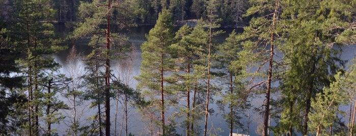 Hynkänlampi is one of Kesäspotit.