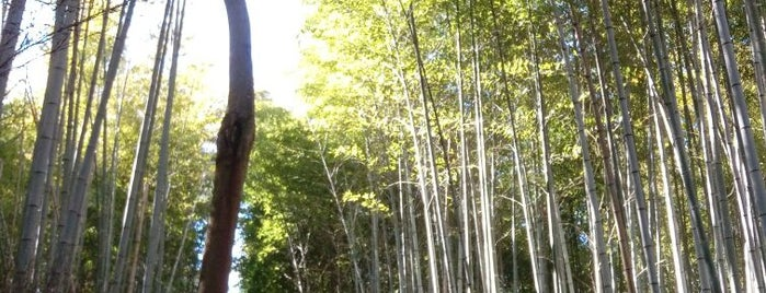 Arashiyama Bamboo Grove is one of Orte, die SV gefallen.