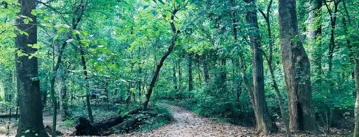 Rock Creek Park - The Line is one of Posti che sono piaciuti a Andrew.