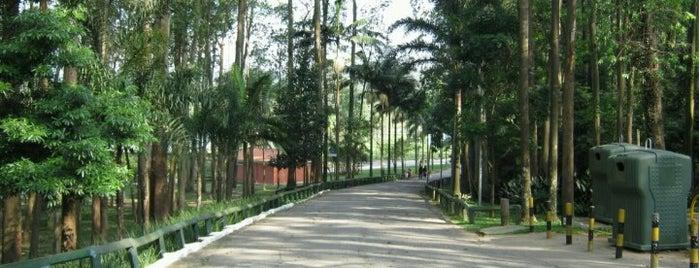 Parque do Carmo - Olavo Egydio Setúbal is one of Sampa 460 :).