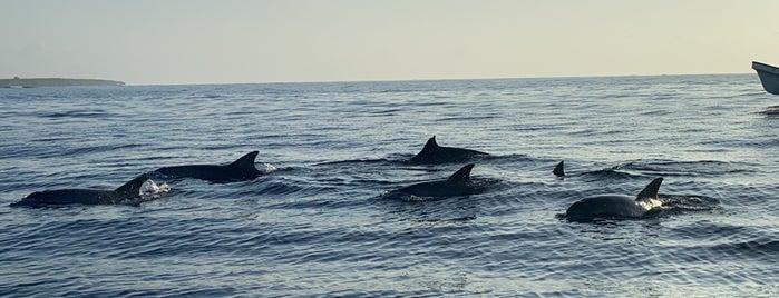 Zanzibar Dolphin View Paradise is one of Gespeicherte Orte von arz-ı.