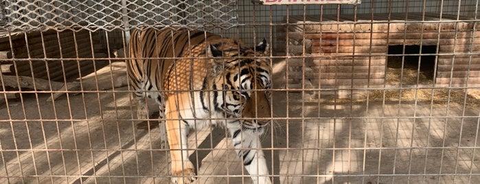G.W. Exotic Animal Park is one of สถานที่ที่บันทึกไว้ของ Matt.