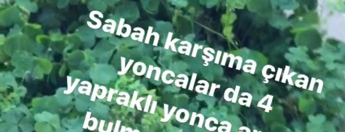 İkizler Hasan Ustam is one of Tempat yang Disukai Murat karacim.