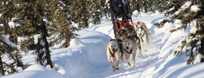 Windy Lake is one of Sled Dog Trails.