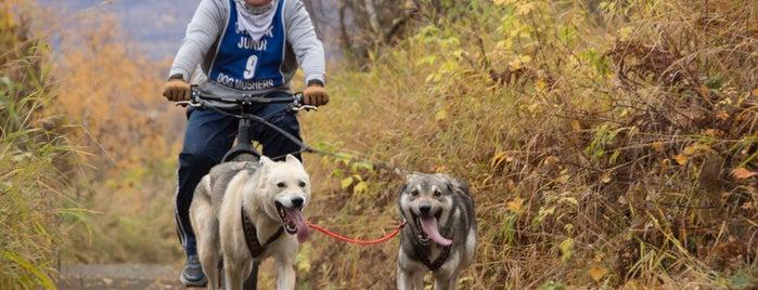 chugiak dog mushers is one of Mushing.