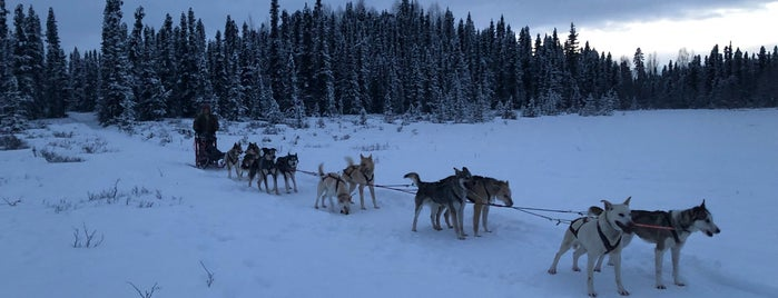 Lost Lady Loop is one of Sled Dog Trails.