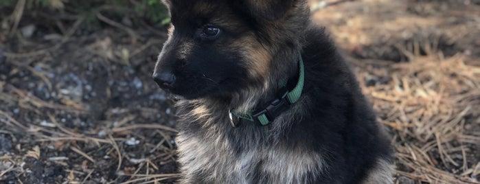 Rocky Mountain German Shepherds is one of Lugares favoritos de Robert.