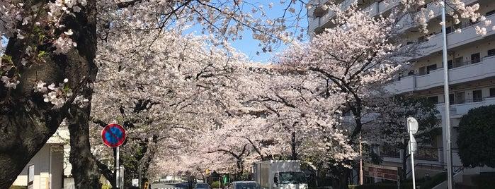 さくら坂 is one of 🌸桜が綺麗な坂.