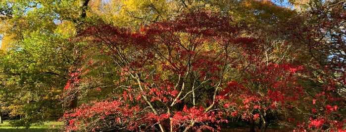 Westonbirt, The National Arboretum is one of South West UK.