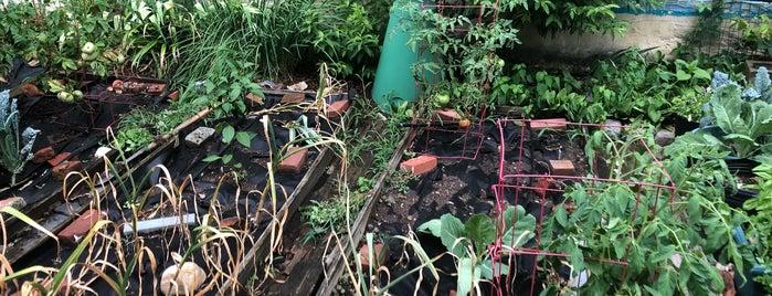 Bodine Street Community Garden is one of Locais curtidos por Joseph.
