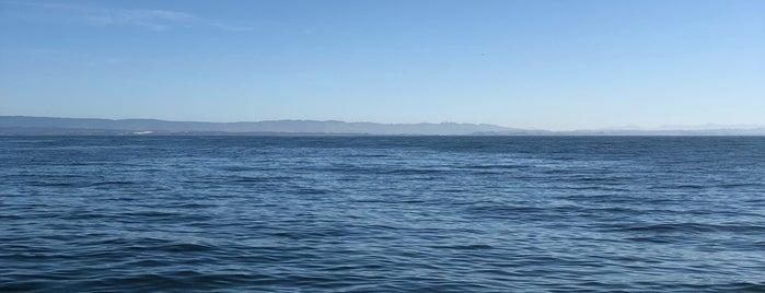Monterey Bay is one of Posti che sono piaciuti a Matthew.