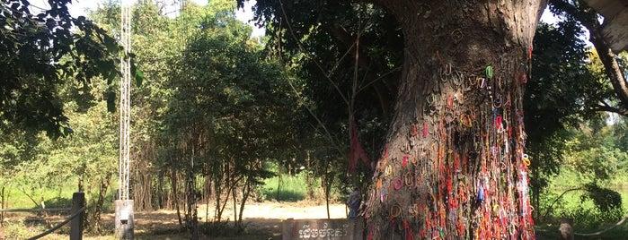 The Killing Tree is one of Tempat yang Disukai Nova.