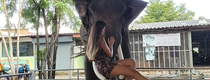 Elephants'camp แคมป์ช้างจอมเทียน is one of (Temp) My Thailand.