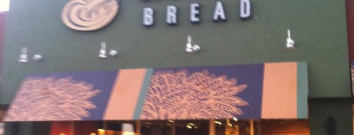 Panera Bread is one of Lieux qui ont plu à $PAR☆LE aka.