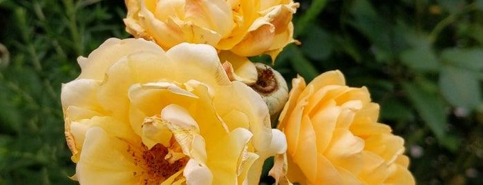 Gil Hodges Community Garden is one of NY'ın En İyileri 🗽.