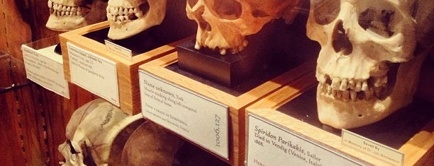 Mütter Museum is one of Frolic!.
